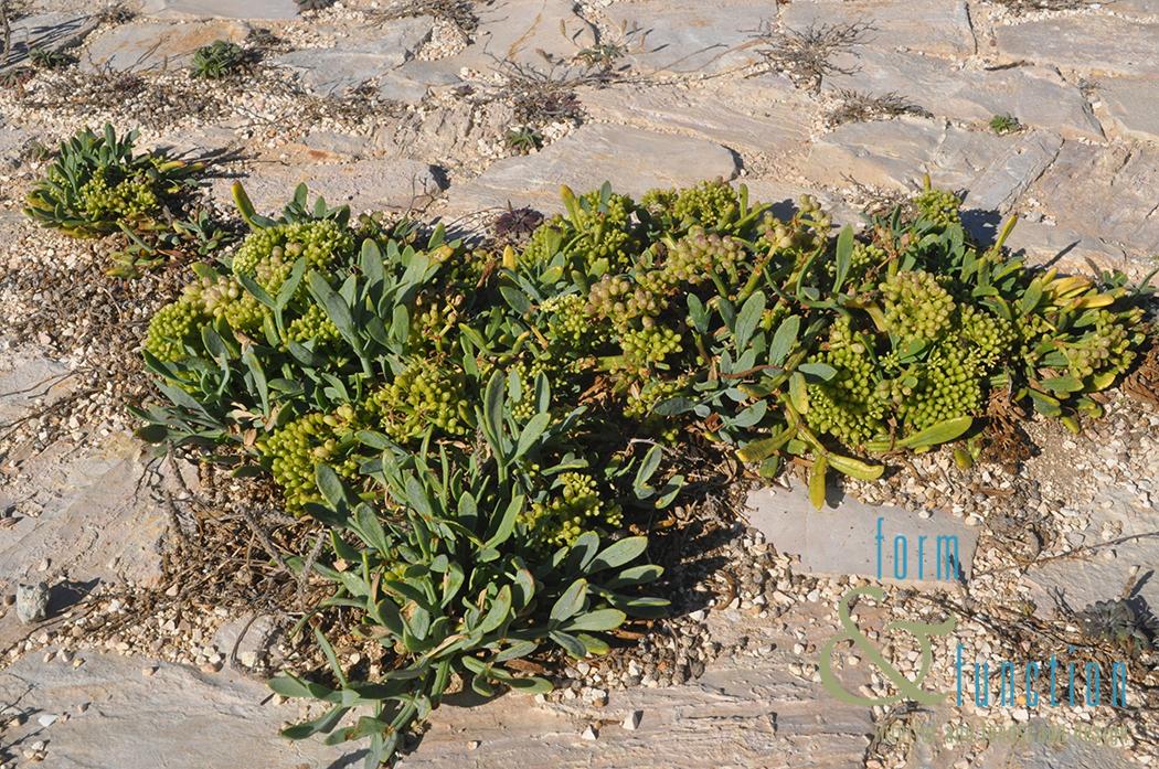 ff-sagres-foliage