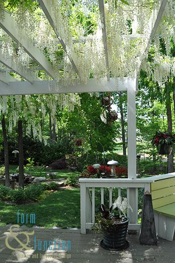 White wisteria and pergola