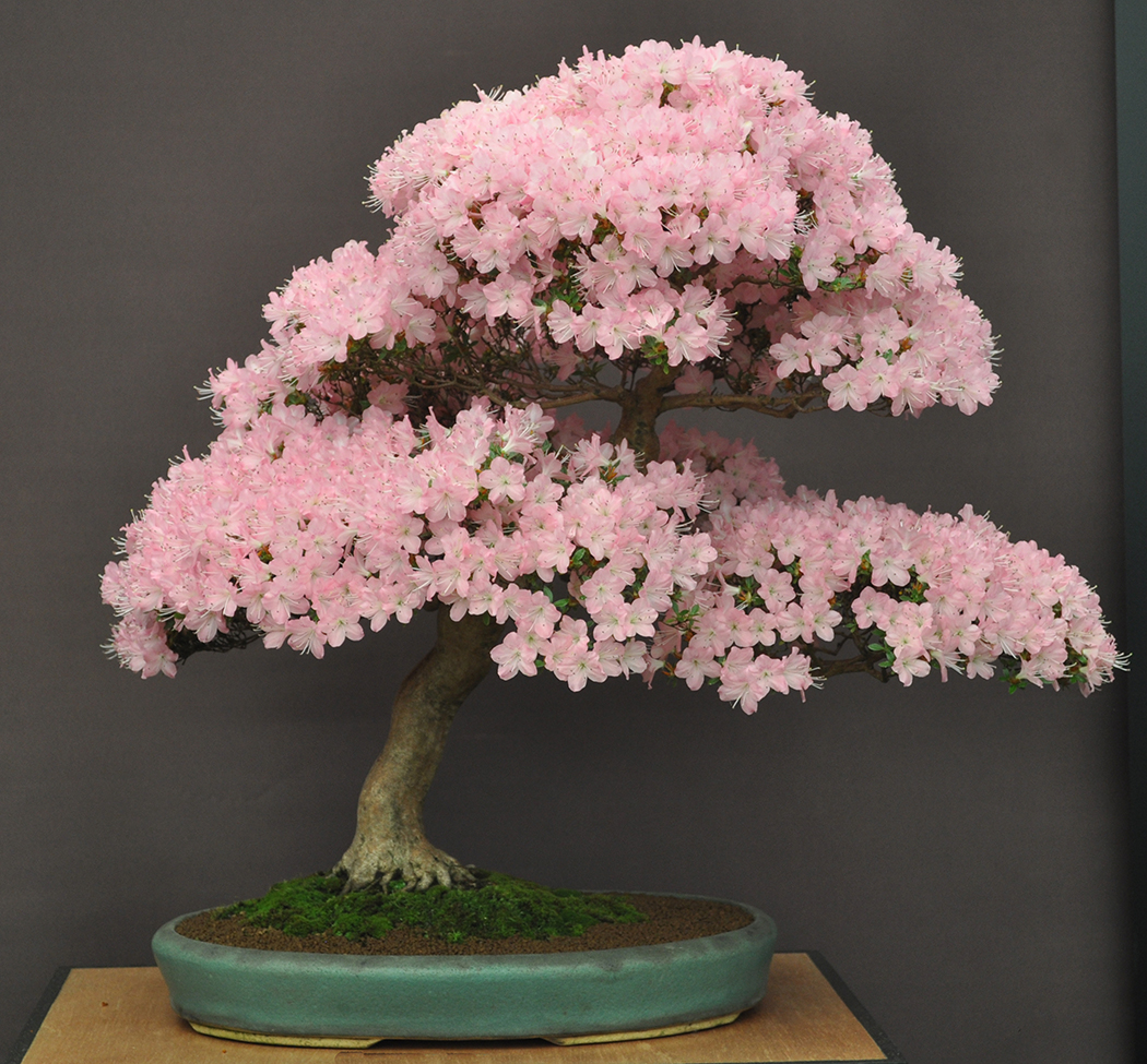 Bonsai Is A 2000 Year Old Living Art Form Capturing The